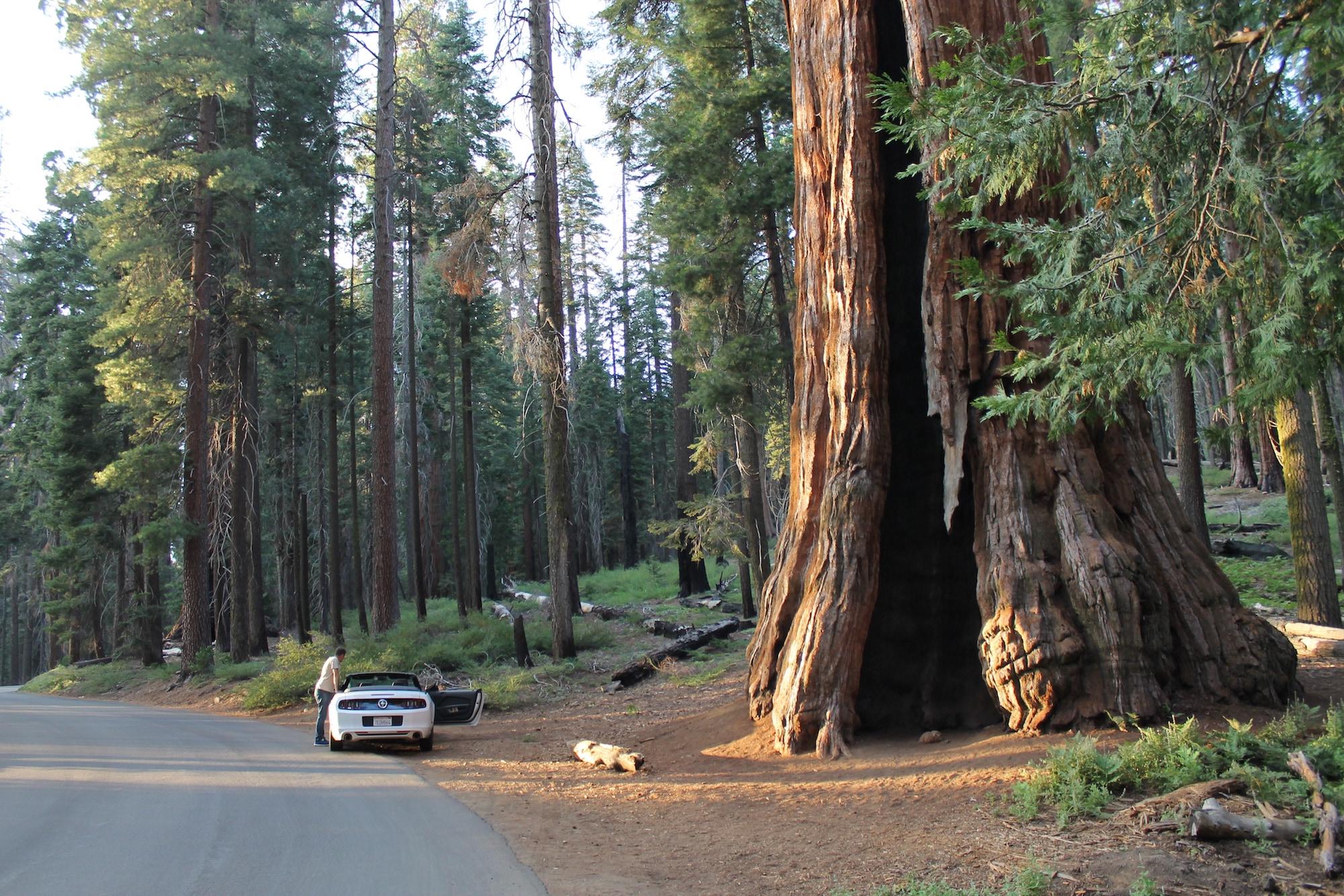 Sequoia National Park, a spasso tra i giganti